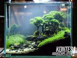 widex aqua design menyediakan aquascape aquarium hias