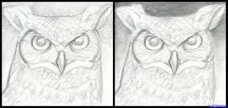 7 how to draw a great horned owl