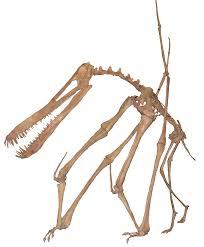 pixel halloween skeleton background file anhanguera skeleton white background jpg wikimedia commons