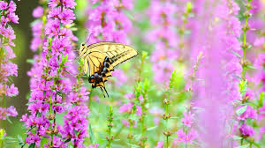 butterfly on nice color flowers wallpapers 1920x1080 840438