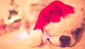 dog christmas dogs and christmas trees pet sitting in fort lauderdale west