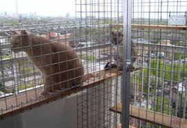 Balconies Enclosures Help Cats Adjust To Balconies Toronto Star