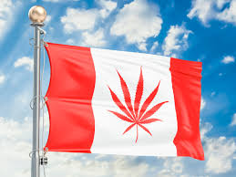Big Red Flag What Will The Future Hold For Canada U0027s Cannabis Growers