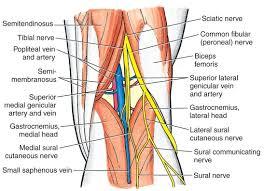 Fibular Avulsion Proximal Tib Fib Dislocation Sports Orthobullets Com