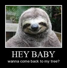 Funny Sloth Pictures Meme - yes very demotivational demotivational posters very