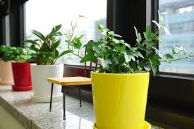 Indoor Plant Light by The Ultimate Guide To Indoor Plants Ambius