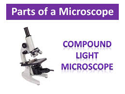 Parts Of A Compound Light Microscope Parts Of A Microscope Important Things To Remember About Using