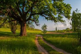 what would your letter to a tree say mnn nature network