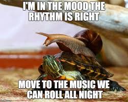 Turtle Memes - slow ride imgflip