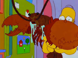 Allagash Allagash Everywhere Toy Story Everywhere Meme - minuute il existe 10 animaux quasi immortels incroyable