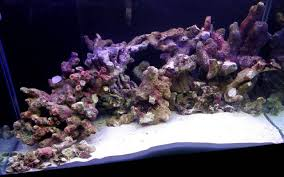 Live Rock Aquascaping Ideas Live Rock From The South Pacific And Indo Pacific