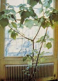 253 best indoor garden images on pinterest houseplants indoor