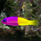 saltwater fish marine aquarium fish for saltwater aquariums