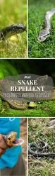 best 25 snake repellant ideas on pinterest where do snakes live