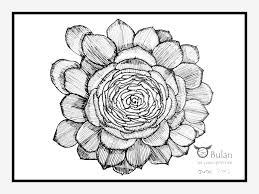 sketch of the day no 68 desert plant at kew gardens u2013 the crazy