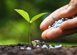 how to make your vegetable garden fertilizer loyalgardener