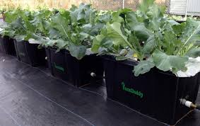 Self Watering Garden Containers How It Works U2014 Garden Self Watering Containers Farmdaddy