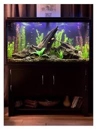most beautiful freshwater tanks all time ratemyfishtank com