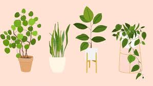 best house plants the best houseplants that basically anyone can keep alive