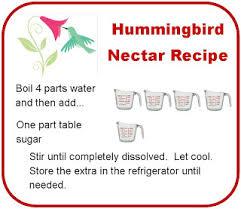 homemade hummingbird nectar recipe next stop pinterest birds