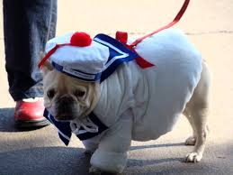 adorable dogs in halloween costumes 14