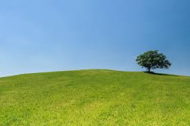 Free Green Free Stock Photo Of Eco Green Hill