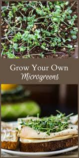 143 best sherry u0027s microgreens images on pinterest indoor