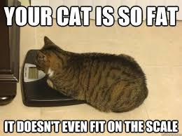 Fat Cat Heavy Breathing Meme - cat meme heavy breathing meme center