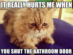 Cat Problems Meme - hilariously heartbreaking first world cat problems that we probably