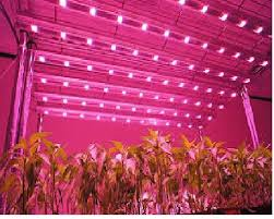 Led Grow Lights Cannabis Best Fluorescent Grow Lights Best Led Grow Lights Buying Guide