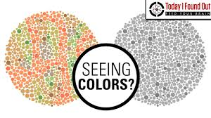 Color Blind What Do They See Can Color Blind People See More Colors When They Take