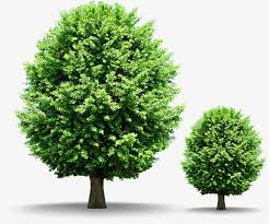 trees green shade decorative trees png image and clipart for free