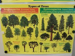 types of trees and their meanings tree wikipedia the free