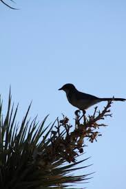 bird in tree picture of joshua tree retreat center at the