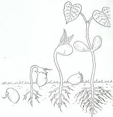 best plant coloring pages 12 10172