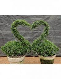 Topiary Plants Online - plant rabbit topiary plant online shopping india chhajedgarden