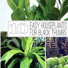 best indoor plants for low light indoor plants low light how to grow houseplants in low light