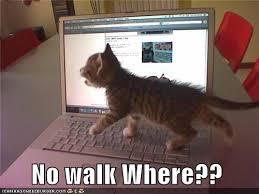 Cat Laptop Meme - no walk where i can has cheezburger funny cats cat meme