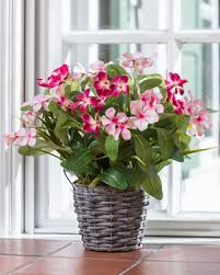 Silk Flower Plants - realisitic artificial flowering plants at officescapesdirect