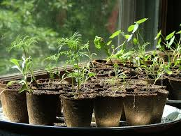 how to start cheap plants germinating seeds cheaply and easily