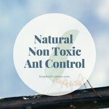 get rid of ants in the home or outside stop ant problem