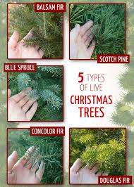 best 25 live trees ideas on