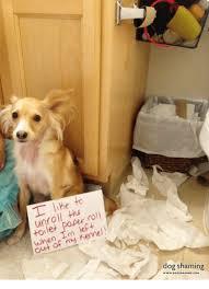 Dog Shaming Meme - paper roll unroll when im kennel my dog shaming meme on me me