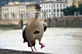 Dolan Duck Meme Generator - duck meme generator meme best of the funny meme