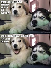Imgur Com Meme - dog meme dump with bonus onion album on imgur