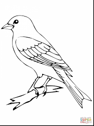 magnificent the toucan barbet coloring page to view printable