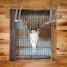 whitened skull with rustic tin wall frame includes wall mounting