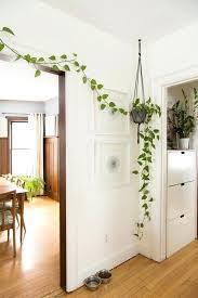 floor plants home decor plants for home decor s floor plants home decor mindfulsodexo