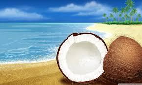 exotic coconut on the beach 4k hd desktop wallpaper for 4k