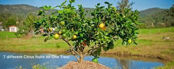 fruit salad trees home